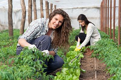 Agriculture original